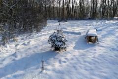 Eingeschneiter-Weihnachtsbaum