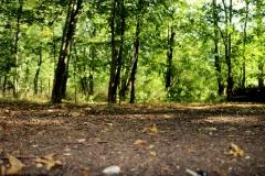 Waldboden-scaled
